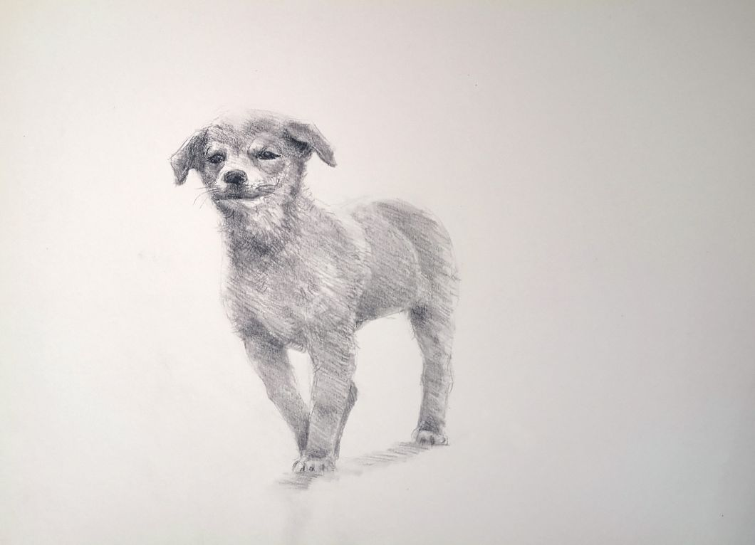 How to draw a dog - easy step by step video tutorial