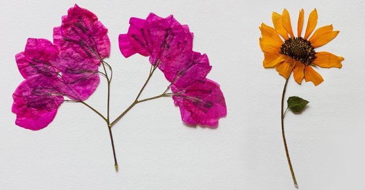 activités manuelle - pressage de fleurs
