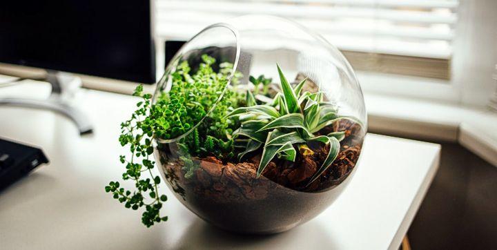 activité a faire a la maison facile - terrariums