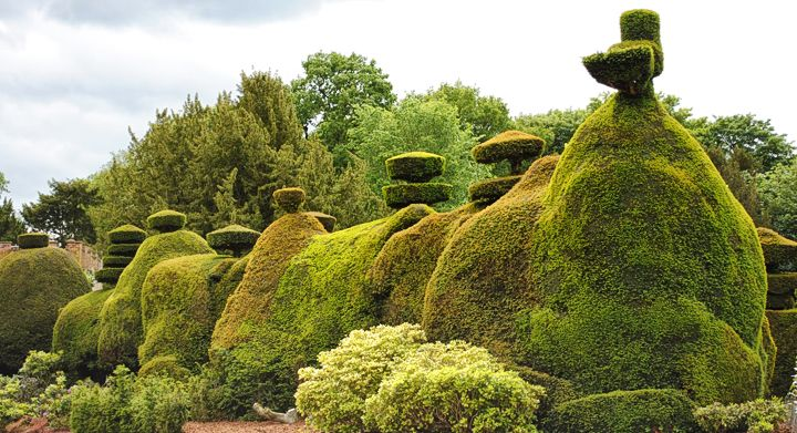 loisirs créatif - topiary
